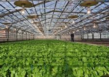 Maribo Seed væksthus